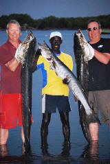 Huge Guinean Barracudas 48lb & 46lb caught in the Gambia River