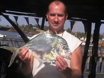 African Threadfish commonly known as Alexandria Pompano