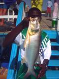 Captain Fish commonly known as West African Threadfin