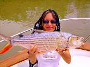 Freshwater Tigerfish caught in The Gambia River